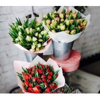 Tulpes, dažādas krāsas, izmērs no 30-40cm